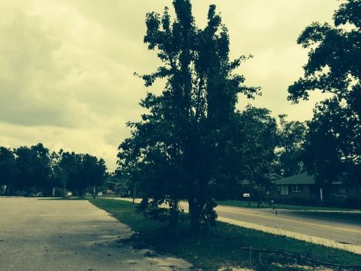 an unpruned, pitiful apple tree in our neighborhood