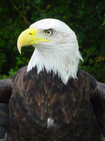 bald-eagle-1317040-639x852