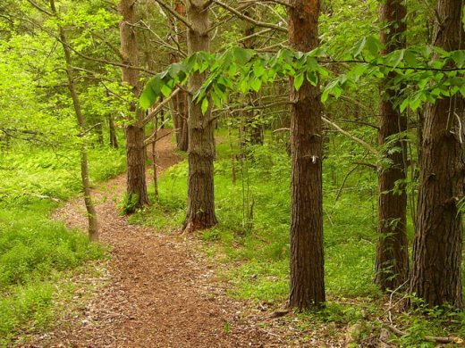wooded-path-1315227-640x480
